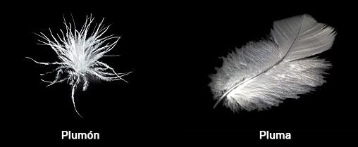 Comparación-entre-plumón-y-pluma